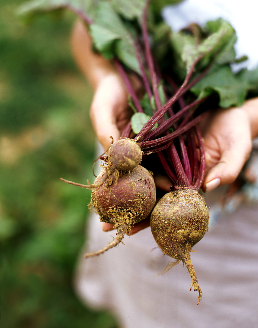 More_SaturFarm_Beets_APF