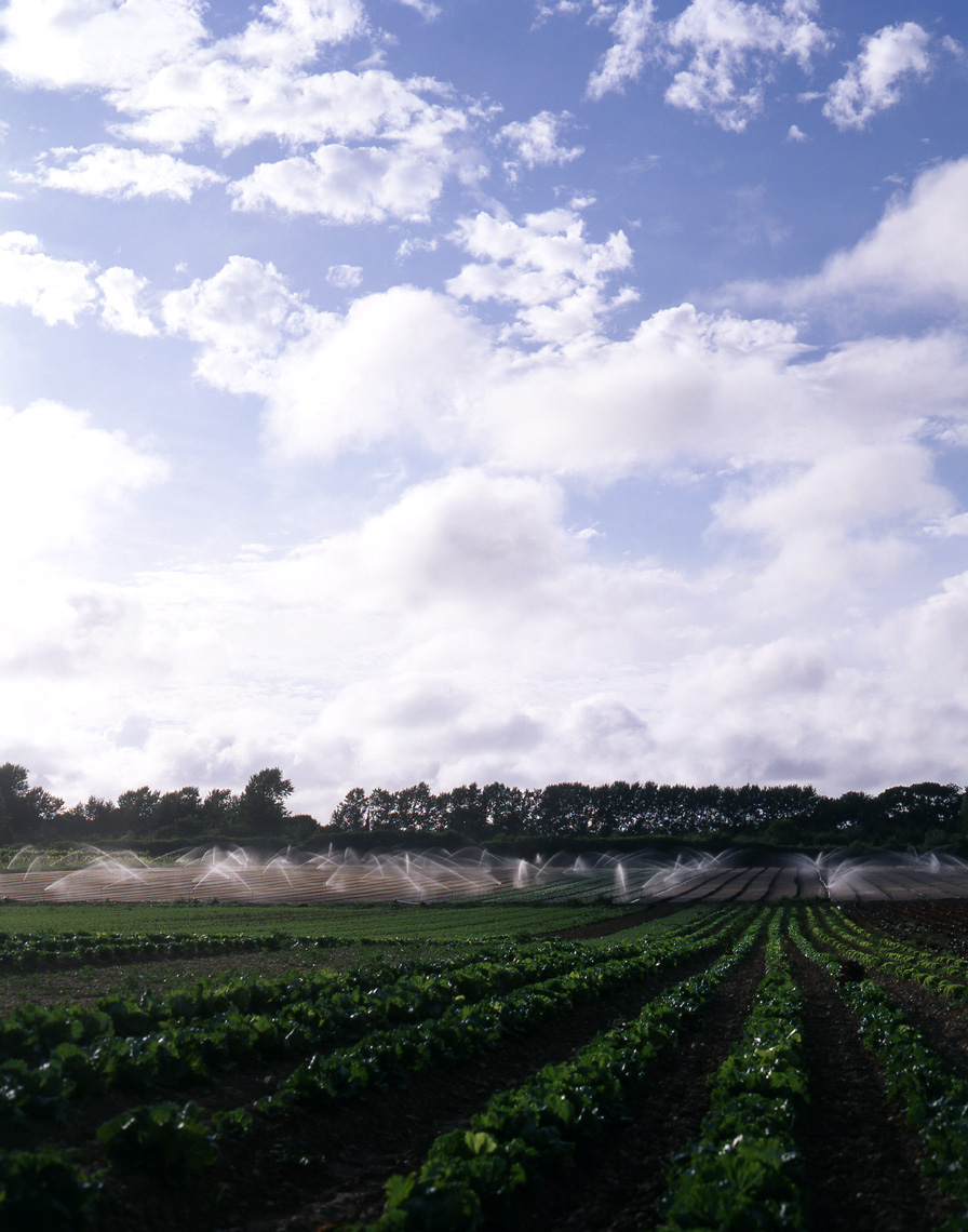 More_SaturFarm_FieldwSprinklers_Crop_APF